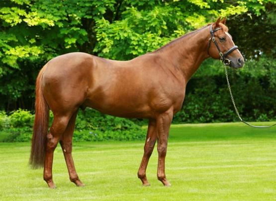 stallion 4